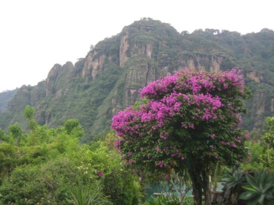 Villas Valle Mistico: -