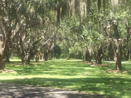 Litchfield Plantation: 2nd Avenue of Oaks