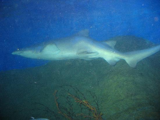 Aquarium of Western Australia - AQWA: Shark!