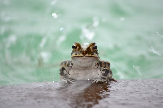 Playa Viva: Froggie at the pool after the storm