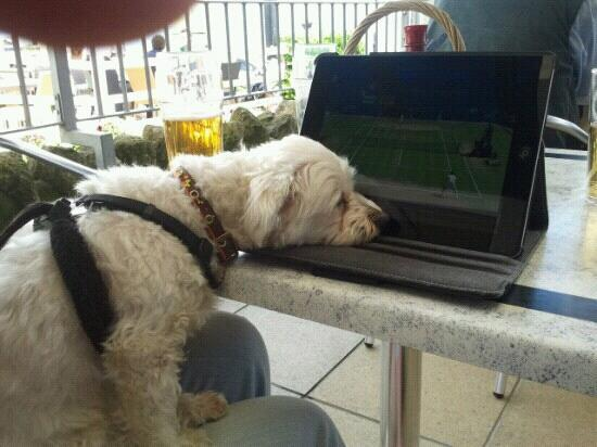 The Steamer Inn: rowley as andy murray crashes out at wimbledon 2012. watched via free wifi at the steamer