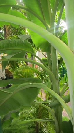 3 Mangos: Lush Garden