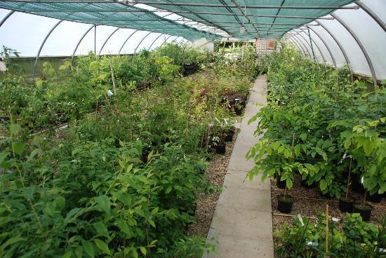 Bluebell Arboretum and Nursery: Nursery sales tunnel