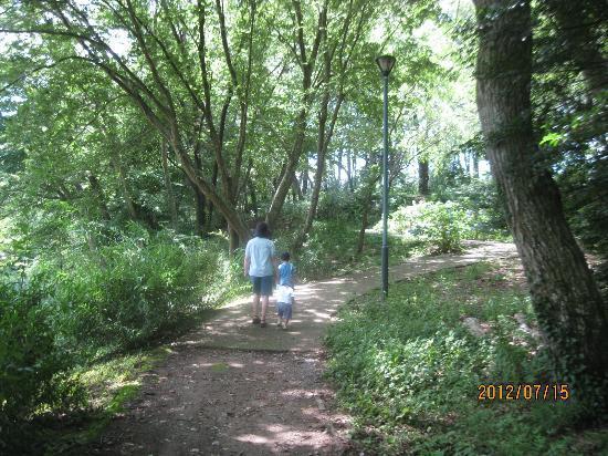 Funabashi, Japan: 森林をお散歩