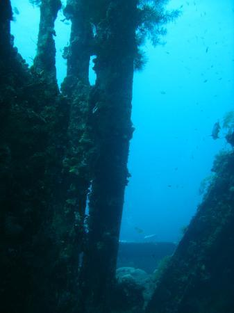 Villa Alba Dive Resort: Liberty wreck