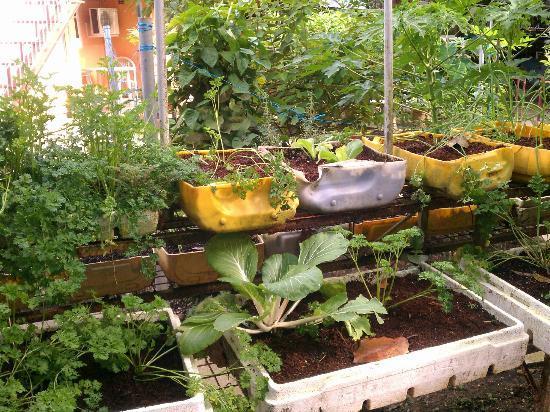 Carnetta's House & Inn: Garden