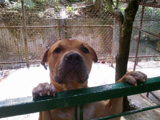 Carnetta's House & Inn: Cute, friendly dog. Didn't see him roaming property.