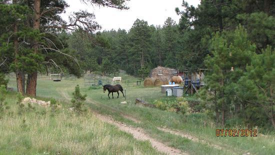Double D B&B Cabins: The owner's horses