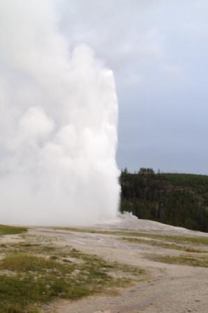 Holiday Inn West Yellowstone: old faithful