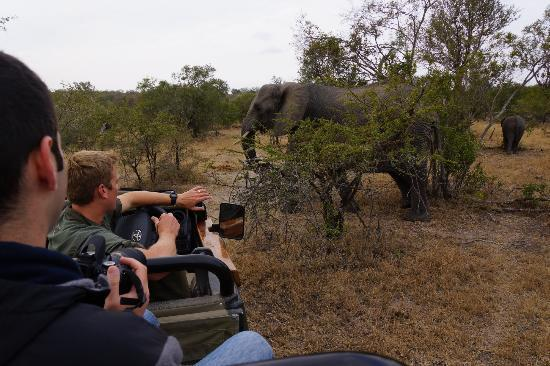 Simbambili Game Lodge: photographing elephants