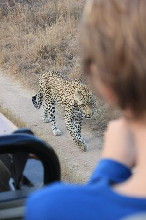 Simbambili Game Lodge: still stalking that impala