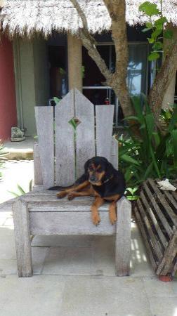 Sin Duda Villas : Fiona on the patio