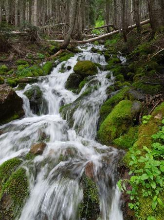 Mowich Lake : not the falls, but a stream you will see on the way!!
