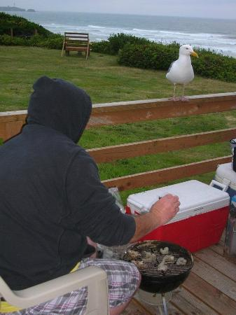 Moolack Shores Motel: 'Gilbert' the seagull - regular visitor!