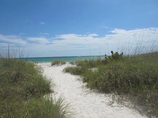 Sand Pebble Resort: On the walk to the beach (from the pool)
