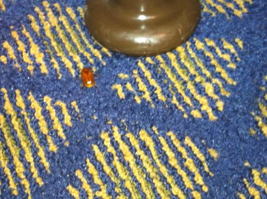 BEST WESTERN Oceanside Inn: bed bug