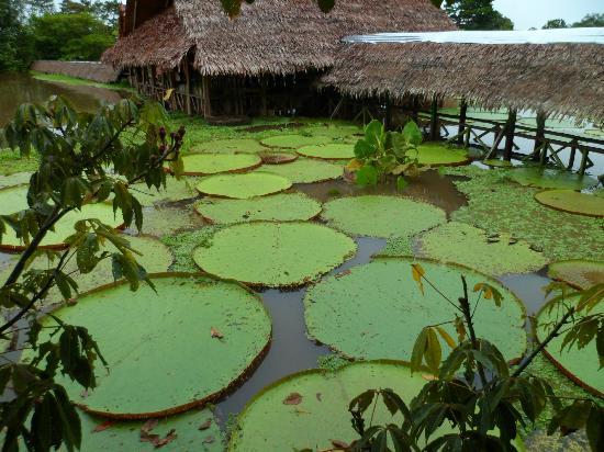 Hotel Pirarucú: Reserva Natural Flor de Loto