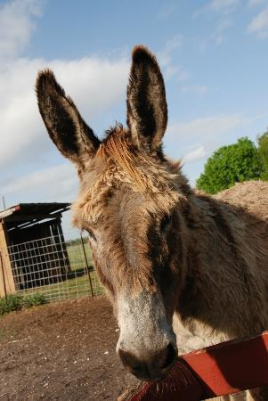 Bradenton, FL: Donkey