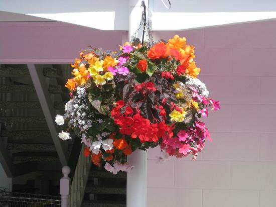 Union Victoria Motel: Summer Hanging Basket
