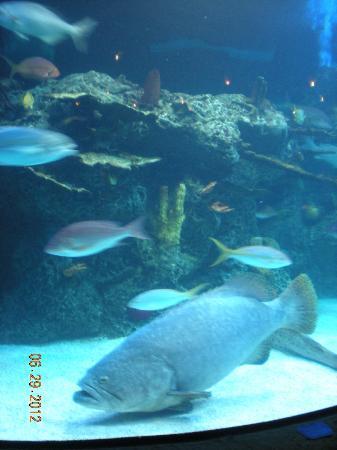 Aquarium Restaurant Large In Center Of