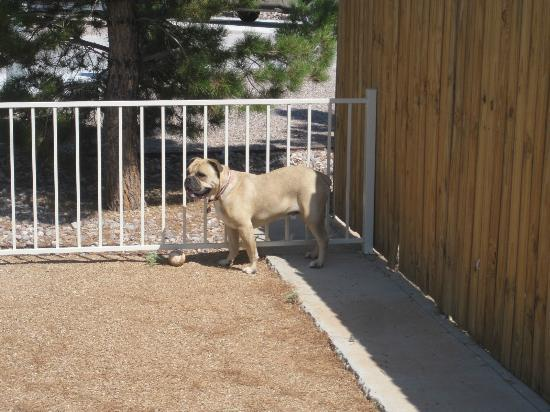 Elephant Butte Inn: Fenced in Dog Park....and it's OK to be off-leash!