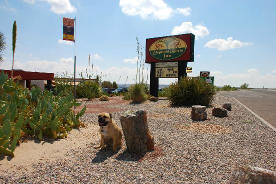 Elephant Butte Inn: Front of Inn....ready to check in AND relax!