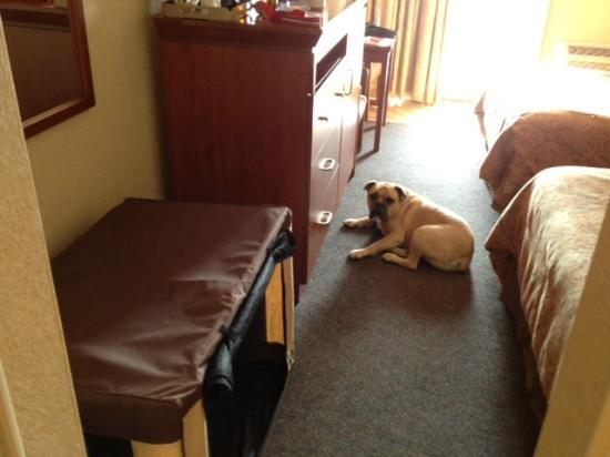 Elephant Butte Inn: Nice comfy room and even floor space for my travel crate!