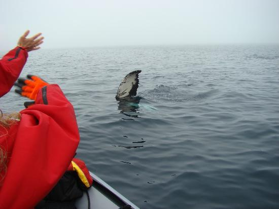 Sea of Whales Adventures: waiving