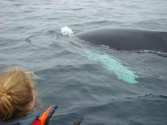 Sea of Whales Adventures: calf