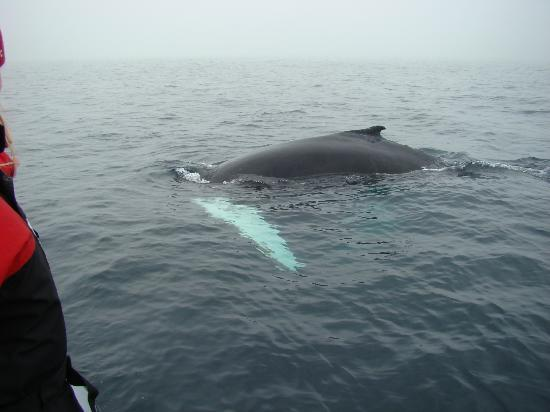Sea of Whales Adventures: calf again