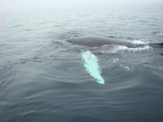Sea of Whales Adventures: calf swimming around us