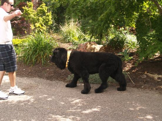 Pleasant Bay Village: Bear - the resident mascot