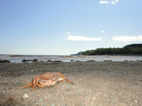 Alma, Kanada: Beach at low tide