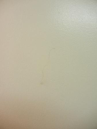 Carefree Inn Houston Medical Center: Hair of the previous occupant on the bathroom door?
