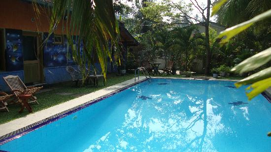 Black Beauty Guesthouse: Pool