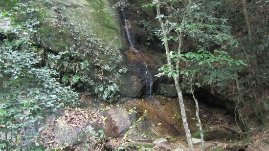 Parque Lage: Waterfall on the trail to Corcovado