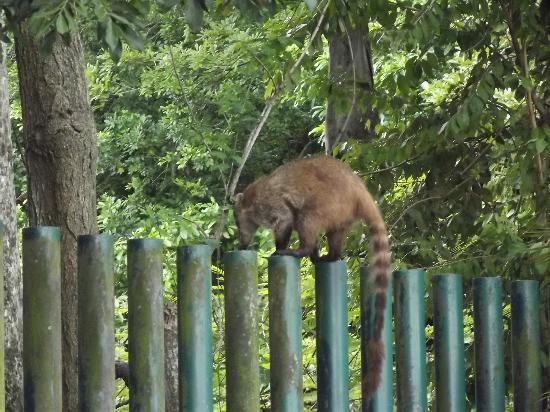 Foto De Parque Museo La Venta Villahermosa: Foto De Parque Museo La Venta, Villahermosa: Fauna Por Los