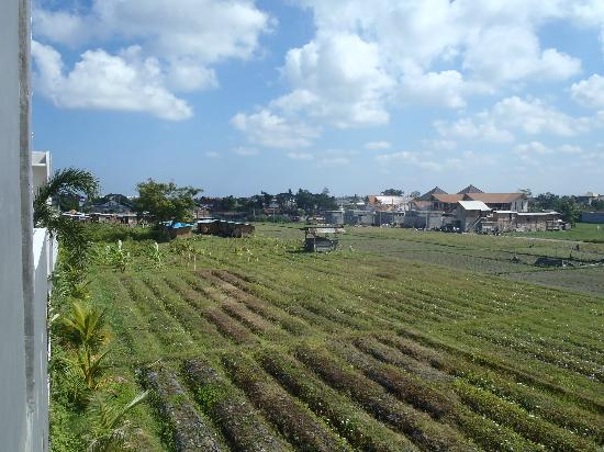 D'Djabu Hotel: Rice fields