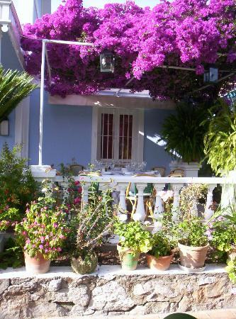 La tirana marbella fotos n mero de tel fono y for Jardin andaluz