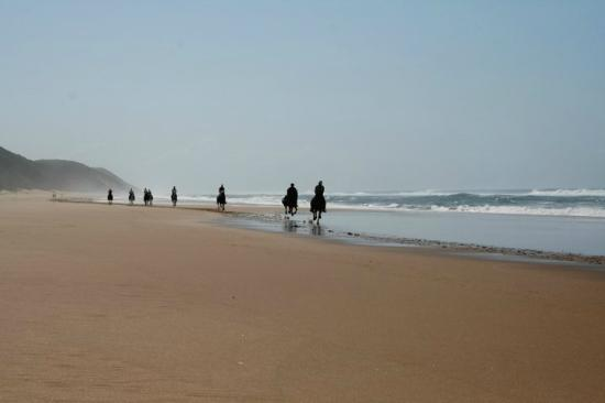 Bhangazi Horse Safaris: Beach rides along the beach