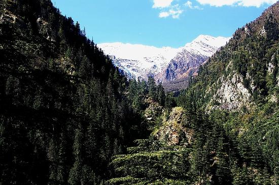 Invitation of natural charm of Gangotri surroundings