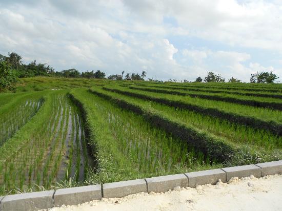 Homestay Bali Starling: De weg naar Echo-beach