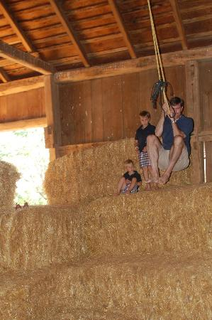 Stone Haus Farm Bed and Breakfast: the awesome rope swing-fun for the whole family!