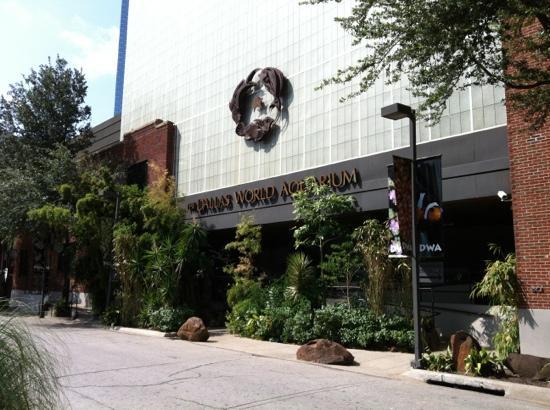 Aquarium Picture Of Dallas World Aquarium Dallas