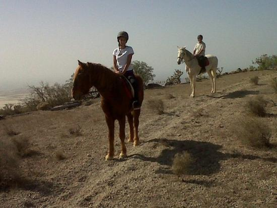 Centro hípico Horse Riding Adventures in Tenerife: on top of the mountain at the back of our stables