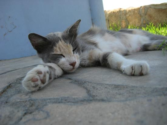 Hotel St. George: cyprus cat