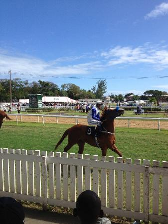 Barbados Turf Club
