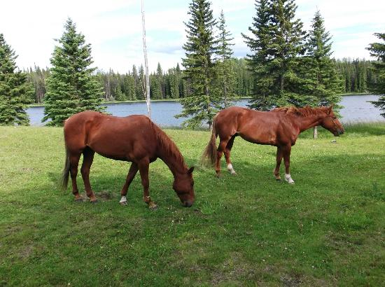 Free Rein Guest Ranch: The horses grazing around the lodge