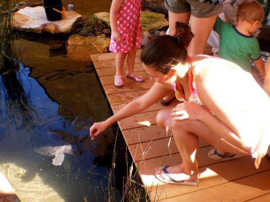 Crocosaurus Cove: Feeding the turtle's