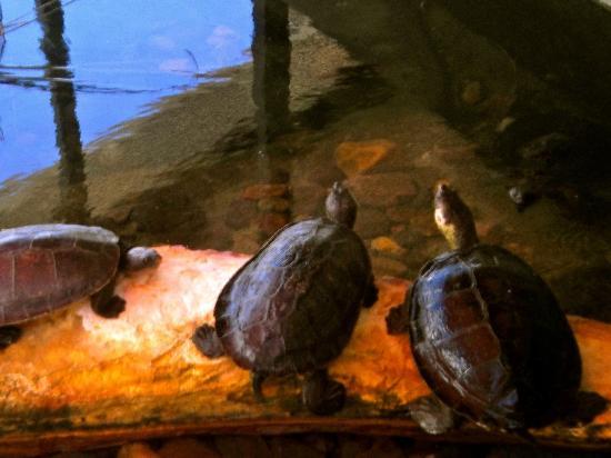 Crocosaurus Cove: Turtle's chilling